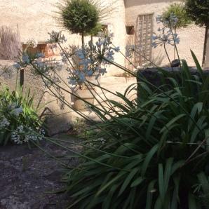 Agapanthes-jardins-Marta-01