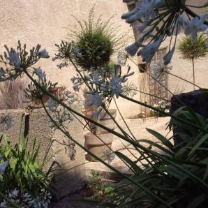 Agapanthes-jardins-Marta-04