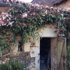 cabane-jardin-5